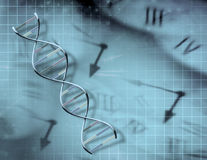 Clock and DNA Stock Images