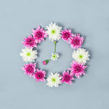 Clock face made of chrysanthemum. Royalty Free Stock Photos