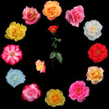 Clock face made of roses Royalty Free Stock Images