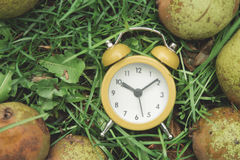Clock in the grass Stock Image