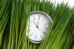 Clock and green grass Stock Images