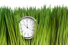 Clock and green grass Royalty Free Stock Photo