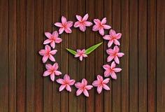 Clock pink frangipani flowers Stock Image