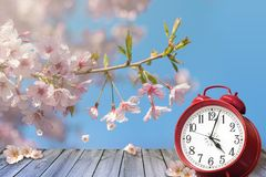 Clock and spring cherry flowers on wooden table - daylight saving time concept. ÑŽ royalty free illustration