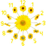 Clock with sunflowers Royalty Free Stock Image