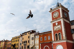 Clock Tower with bird On The Tito Square in the center of the historic European city Rovinj in Croatia. Stock Image