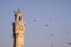 Clock tower and pigeons. Stock Photos