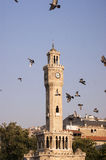 Clock tower and pigeons. Stock Photography