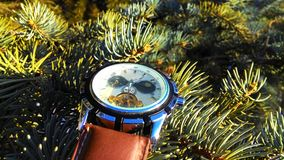 Watches on the tree. The wathes on the green needles ate. In a design style. Light photo in sunny weather Stock Photos