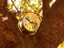 A clock on the tree Stock Photography