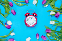 Clock and tulips. Beautiful red alarm clock and tender white and purple tulips lying on the wonderful blue background Royalty Free Stock Images