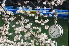 A clock under beautiful cherry blossom trees and rowboats parking on the green water in background in Chidorigafuchi Urban Park. During Sakura Festival in Tokyo royalty free stock images
