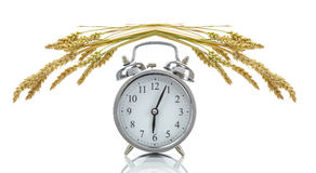 Clock with wheat showing time of harvest Stock Photography