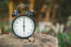 Clock on wood tree nature background time at 6 o`clock. Morning royalty free stock photography