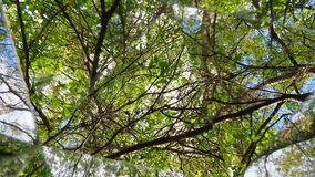CLOCKWISE kalejdoskop drzewa, chmury & niebo, zdjęcie wideo