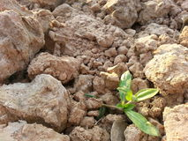 Clod of earth. Land background  nature Royalty Free Stock Photos