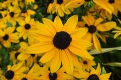 Clode su dei fiori gialli Immagini Stock Libere da Diritti