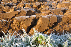 Clods covered by frost Royalty Free Stock Photography