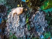 Clodseup abstrai o fundo e a textura da cor de óleo no paette Imagens de Stock Royalty Free