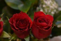 2 cloeup увиденное розами стоковые фотографии rf