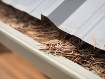 Clogged gutters Royalty Free Stock Photos