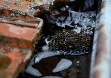 Clogged rain gutter with Leaves and vespiary royalty free stock photography