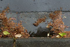 Clogged a street drain during a rain storm. Tree debris clogging a street drain during a rain storm Royalty Free Stock Image