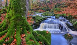CLoghrea River creek, County Wicklow, Ireland royalty free stock photography