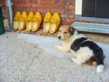 Clogs και σκυλί στοκ εικόνα με δικαίωμα ελεύθερης χρήσης