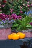 clogs ολλανδικά φυτά ζευγαριού κήπων κίτρινα Στοκ Φωτογραφίες