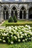 Cloister av abbeyen i Soissons Royaltyfri Foto