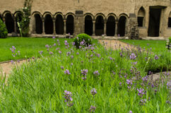 Cloistered courtyard. Lavender in the cloistered courtyard of the Muenster Basilica in Bonn, Germany Royalty Free Stock Images