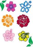 clolorful blommor Royaltyfria Foton