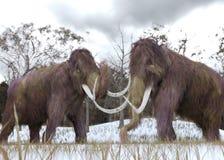 Clones de mammouth laineux Photo stock