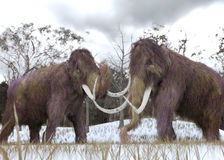 Cloni del mammut lanoso Fotografia Stock