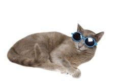 Clopseup do gato doméstico do divertimento com óculos de sol foto de stock royalty free