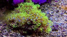 Cloral hermoso debajo del mar metrajes