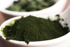 Clorella verde Immagini Stock