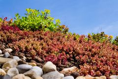 Colorful green living extensive sod roof detail covered with vegetation mostly tasteless stonecrop, sunny day. Colorful green living extensive sod roof detail stock photography