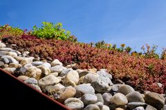 Colorful green living extensive sod roof detail covered with vegetation mostly tasteless stonecrop, sunny day. Colorful green living extensive sod roof detail stock photo