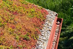 Colorful green living extensive sod roof detail covered with vegetation mostly tasteless stonecrop, sunny day. Colorful green living extensive sod roof detail royalty free stock photos