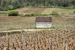 Clos de Beze Grand Cru Vineyard. GEVREY-CHAMBERTIN, FRANCE - APRIL 22, 2018: The Clos de Beze vineyard is a grand cru terroir near the town of Gevrey-Chambertin Royalty Free Stock Photography