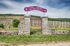 Clos De La Roche storslagen Cru vingård Arkivbilder
