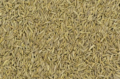 Clos-up of cumin seeds Royalty Free Stock Photography