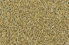 Clos-up de sementes de cominhos Fotografia de Stock Royalty Free