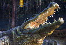 Close agape crocodile. Close-up statue of the crocodile, which was agape in a garden with a waterfall as a backdrop Stock Image