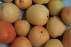 Close of apricots in farmer market stock images
