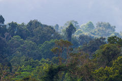 Close background of rainforest Royalty Free Stock Images