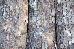 Close Bark sheet nature abstract background Royalty Free Stock Photo