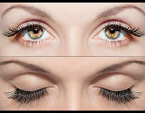 EYE AND FALSE EYELASHES Royalty Free Stock Photos